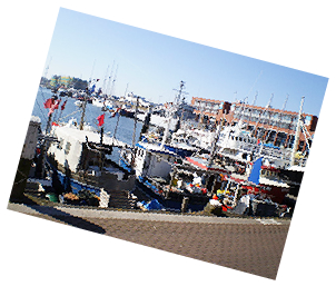 When Touring The Hague we can visit the Marina in Scheveningen